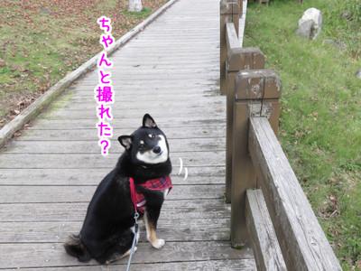 Photo_16